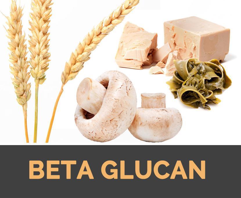 Beta-glucan - hoạt chất tăng đề kháng vượt trội
